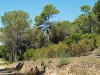 Serra d'en Sunyer