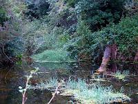 Riera de Santa Coloma
