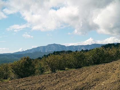 Sant Llorenç del Munt des de les Vinyes del Masclans