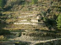 Barraca de vinya i feixes abandonades des del camí Vell del Pont de Vilomara