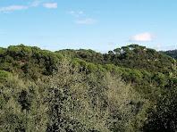 Bosc de Ca la Lluïsa