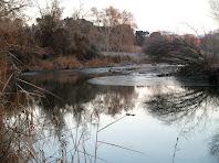 El riu Llobregat a prop de Navarcles