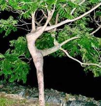 El arbol que quiso danzar