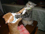 Cats Who Fight