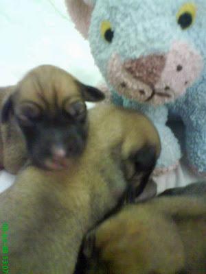 Dogs Trust: July 2008
