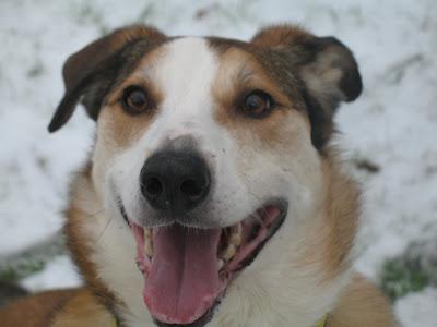 Dogs Trust: January 2009