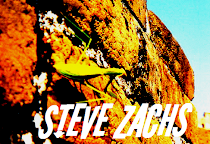 Steve Zachs