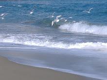 Gabbiani a riva