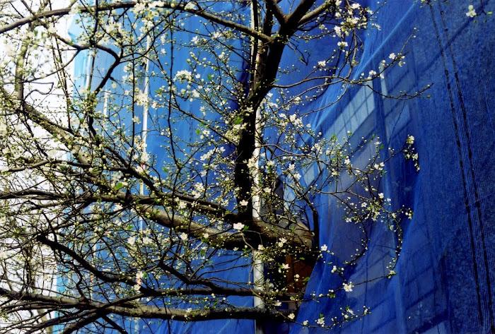 "STEPHEN WILKS, "" Springtime"" mai à jullet 2010"