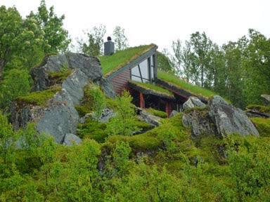 Jack 39 s summer of fab exploring the real world - Build green roof nature home ...