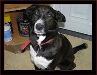 cão sem raça defenida