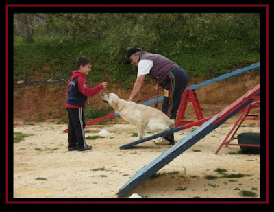 Golden Retriever in Agility with a 8 year old child