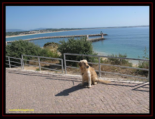 Golden Retriever in Lagos, Algarve