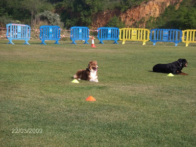 Obedience Competition