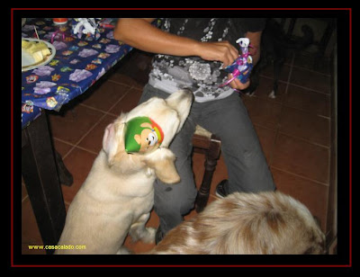 Festa de Anos Canina dos Golden Retriever puppies