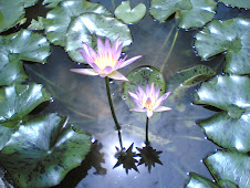 Pair of WateR Lilly