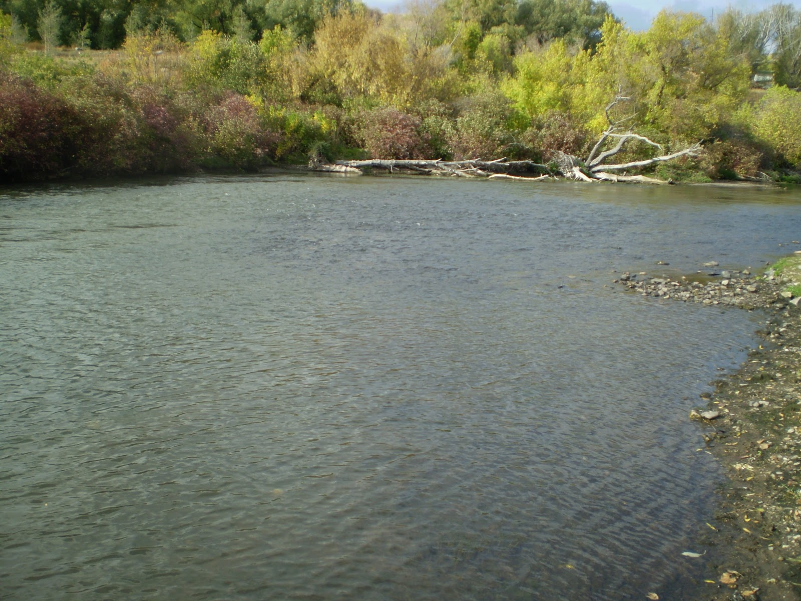 Fly fishing the west with howard a saturday evening on for Provo river fly fishing