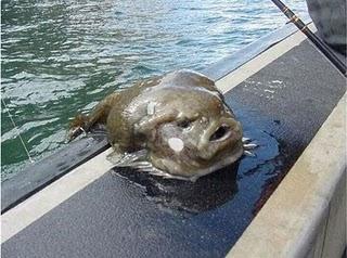 Ada beberapa foto ikan unik dan terbesar dibawah ini. Slahkan lihat ...