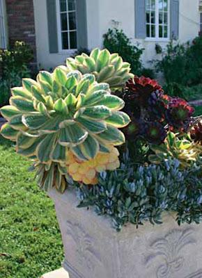 Jardines de cactus y suculentas jardines con plantas - Jardines de cactus y suculentas ...