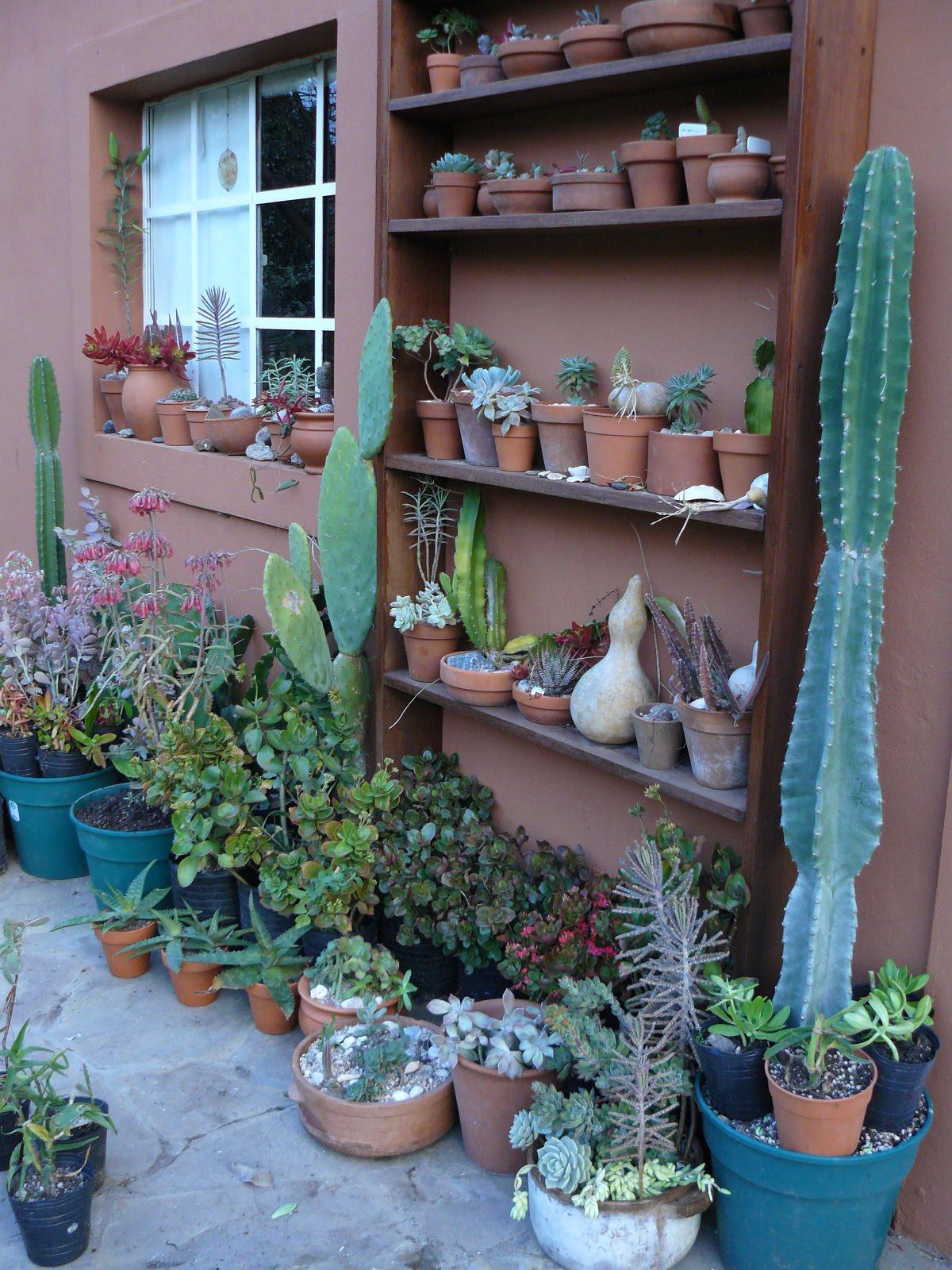 jardin en macetas