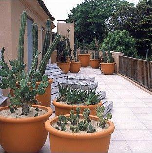 Jardines de cactus y suculentas terraza con jard n de cactus - Jardines de cactus y suculentas ...
