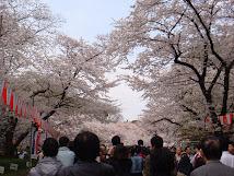 Sakura-Hanami ( Ueno-April-2009)