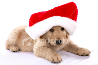 Christmas Puppy Desktop Wallpaper