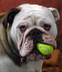 dog health, dog lovers, dog health information