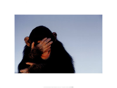 6445032~Embarrassed-Chimpanzee-Posters.jpg