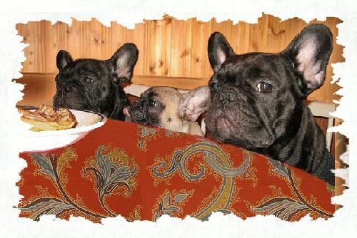 Seu buldogue franc s meu buldogue franc s n o quer comer for A comer en frances