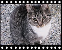 Tabby the cat