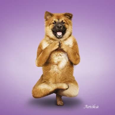 Anjing-anjing kocak berpose yoga