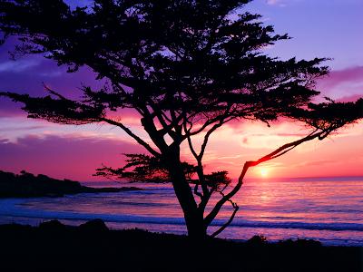 sunset wallpaper. Beach Tree Sunset wallpaper,