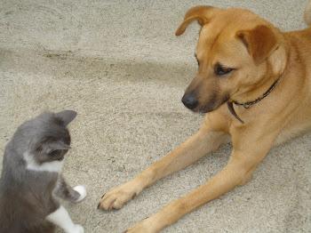 Mas eu gosto dele miau...eu falo (mi) e ele (au)..