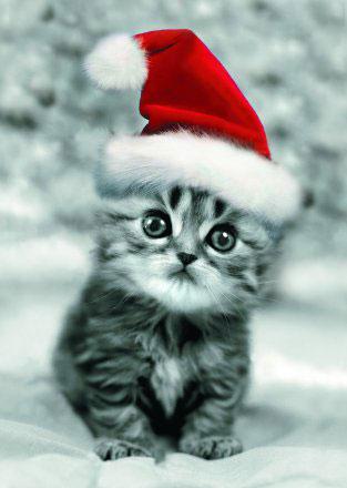 imagenes chistosas de navidad con movimiento - Imagenes Animadas en movimiento navidad
