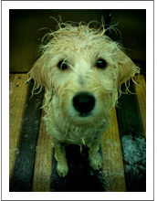 wet wembley
