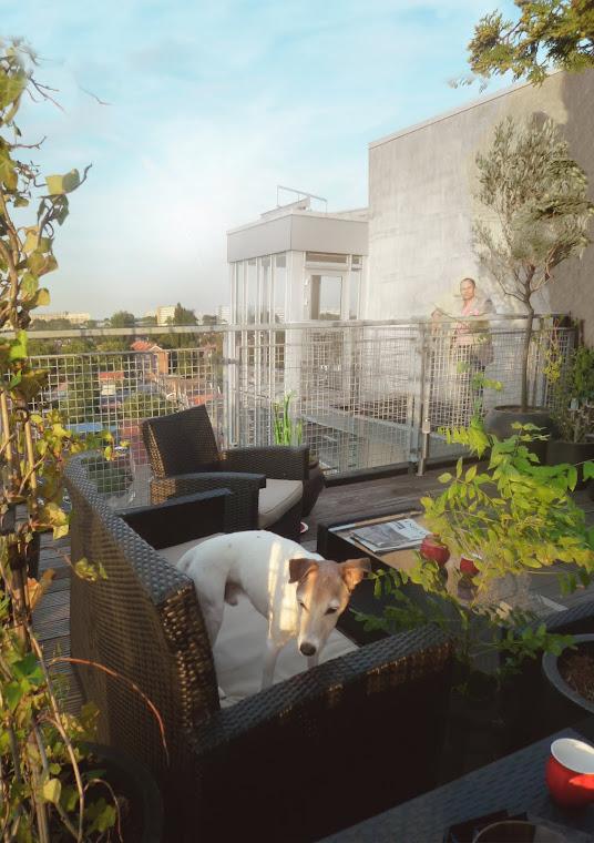 Hip dakterras met exotisch/ sjieke sfeer - Klimop, witte regen en olijfboom