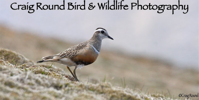 Craig Round Bird and Wildlife Photography