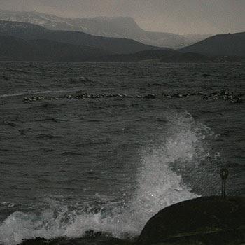 Fuglan som svøm