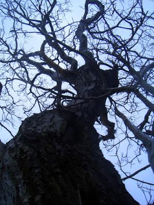 Nærbilde treet