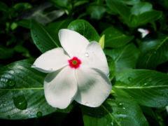 http://ornamentalplants-adira.blogspot.com/