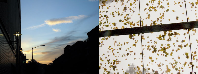 sunset clouds + leaves stuck to glass ceiling