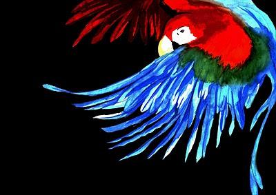 http://1.bp.blogspot.com/__sz1XIJDUy0/TTjzxyo2UXI/AAAAAAAAAEA/ugIjPn7cvoo/s1600/arara.jpg