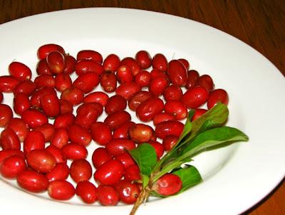 Resim: Miracle Fruit