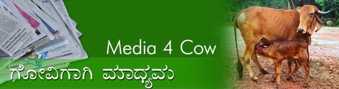 Media 4 Cow