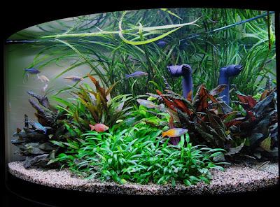 Aquadarium for Piante da acquario