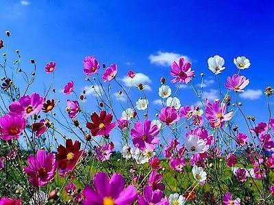 Полевые цветы весной.