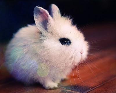 Милые комочки шерсти. Милые животные декоративный белый кролик. Новогодний кролик картинки. Кролики декоративные фото. Кролик белый картинка красив.