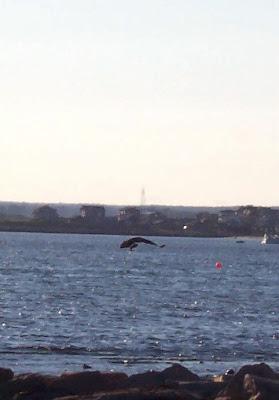 Bird catching a fish, not a sea monster
