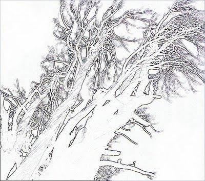 Inulpamahuida - Austin Whittall 2009 copyright ©